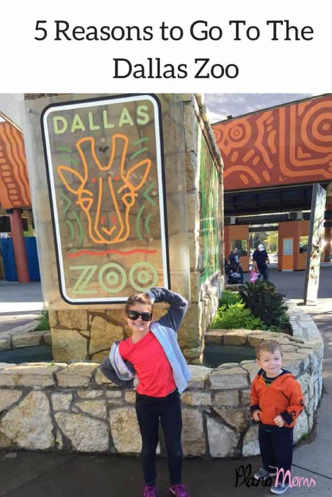 Visit the Dallas Zoo