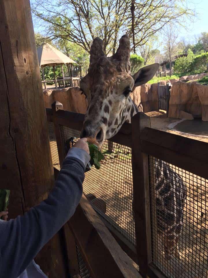 Visit the Dallas Zoo