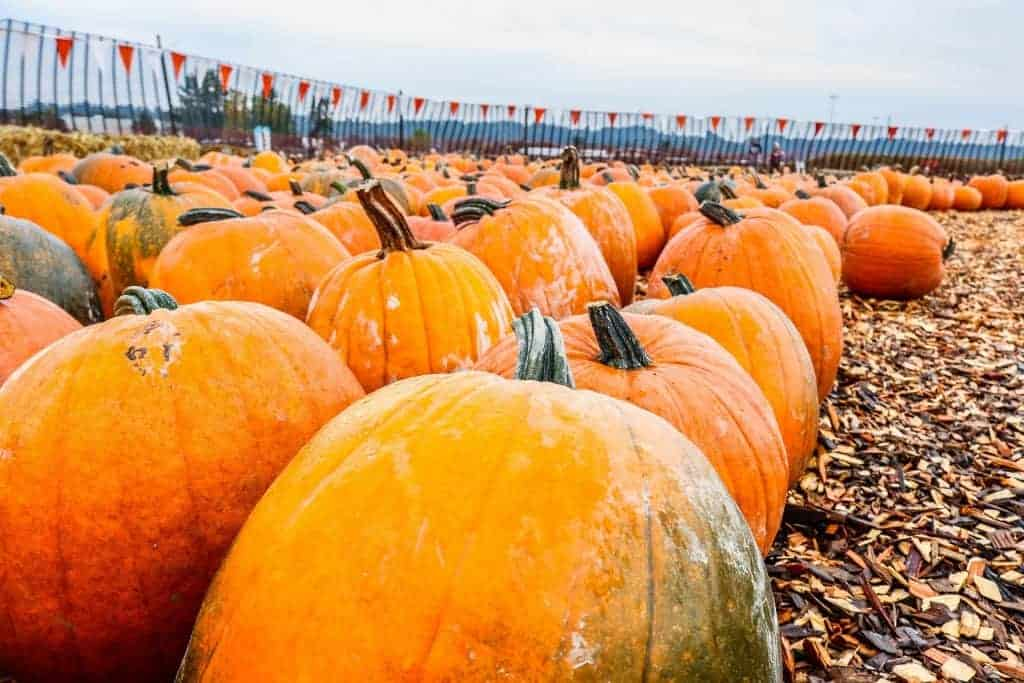 Best Pumpkin Patches in North Dallas