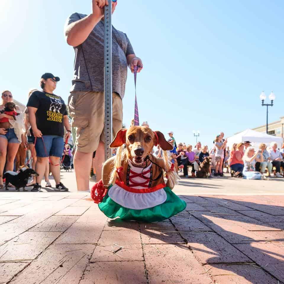 Plano Steinfest Festival