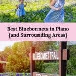 Where are the Bluebonnets?