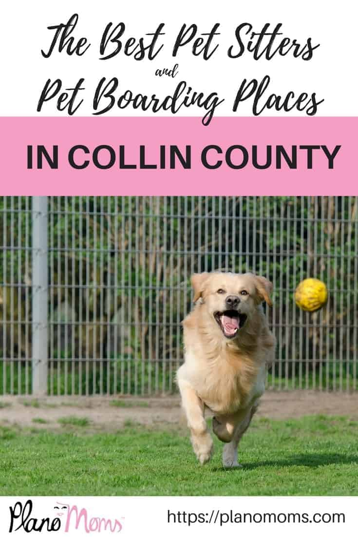 The best pet sitters and pet boarding places in Collin County