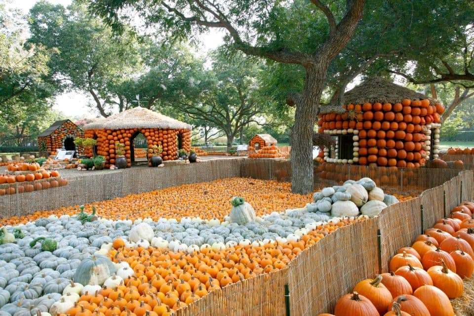 Pumpkin Patches Dallas