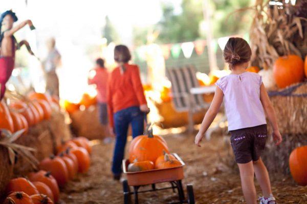 Pumpkins in Plano