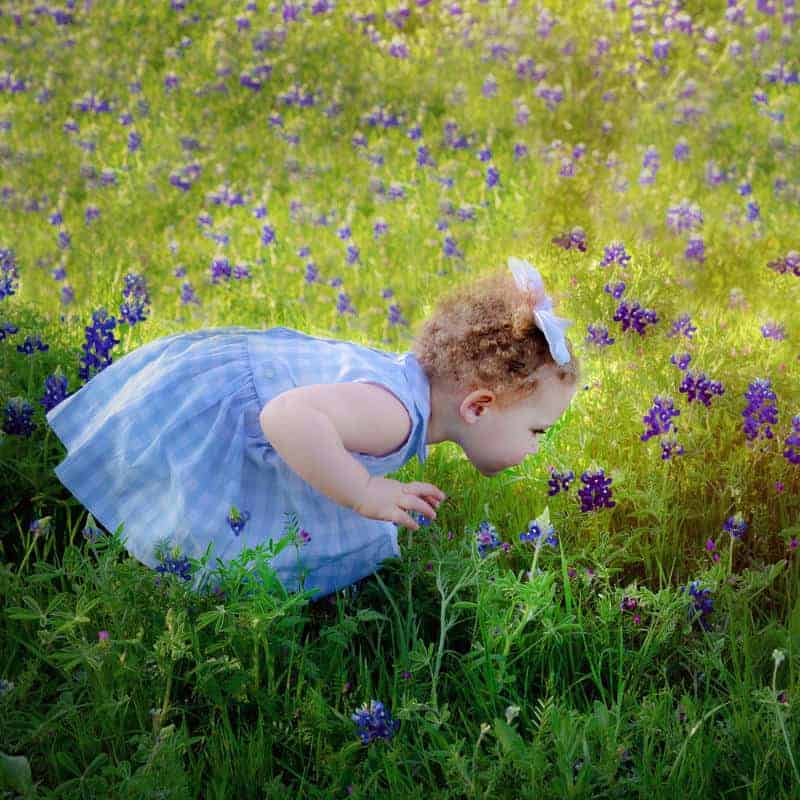 Baby in the Bluebonnets in Plano TX