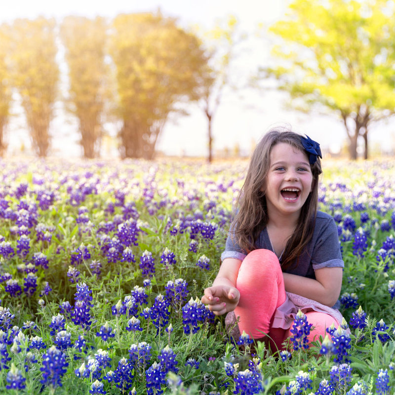 Bluebonnets near me