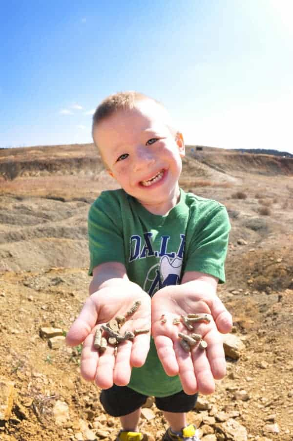 Digging for Fossils in Texas