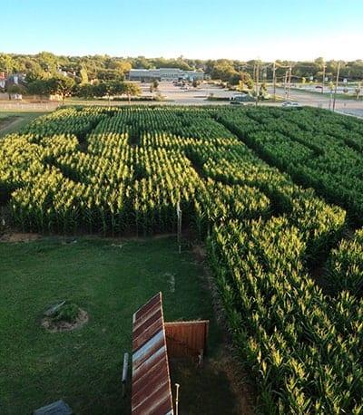 Corn Maze Halls Pumpkin Farm