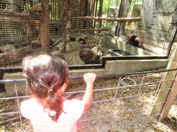 Animals near me Plano TX