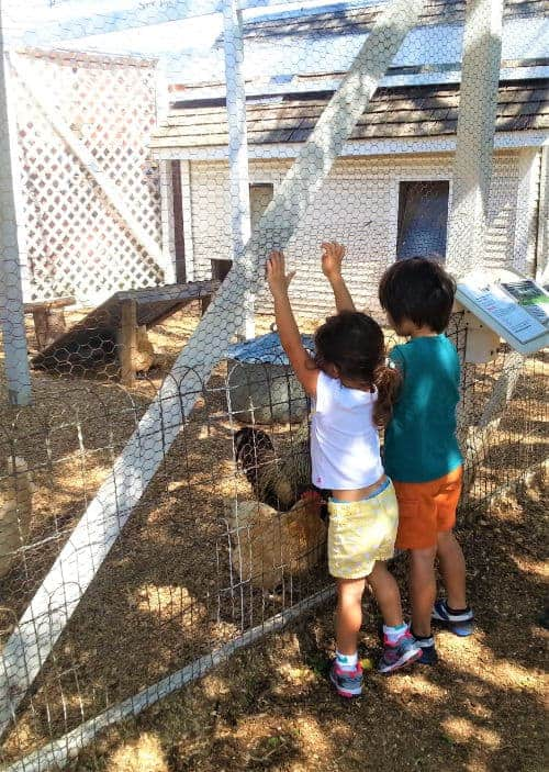 Petting Farm, Animals near me