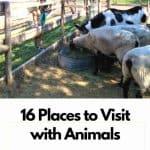 Animals Zoos Farms