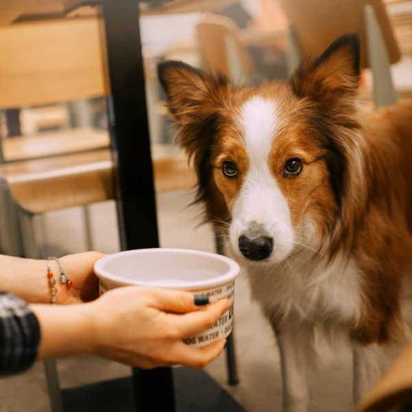 Dog in Restaurant Plano TX
