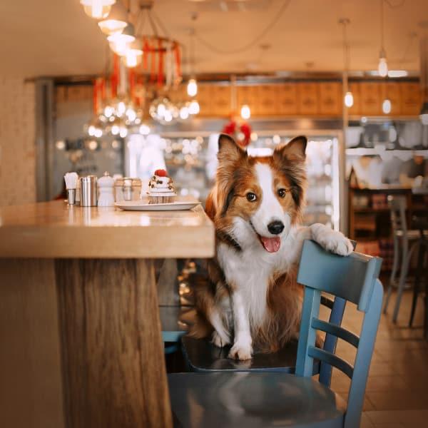 Dog in Restaurant in Plano
