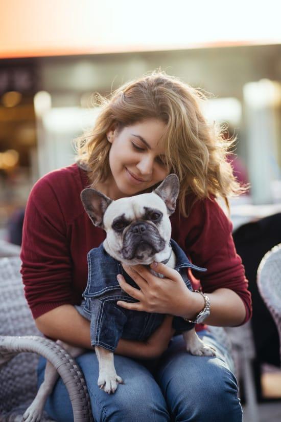 Dog in lap in Plano