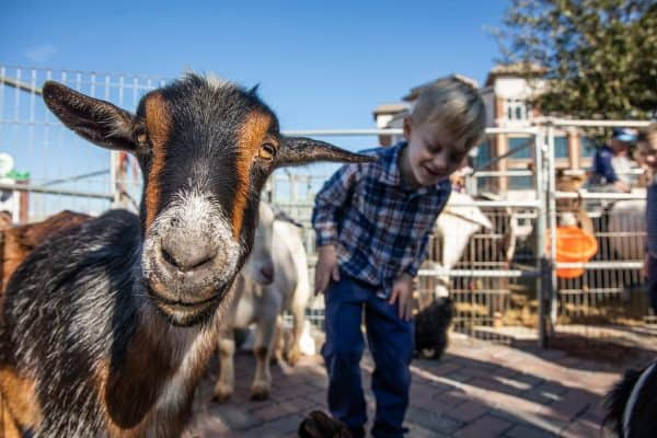 Frisco Farmers Market Petting Zoo
