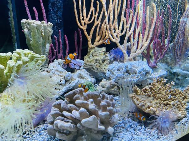 Aquarium Gulfarium Fl