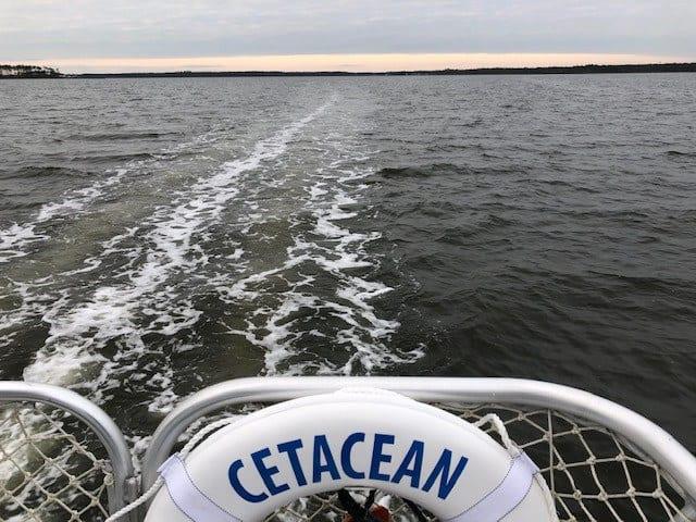 Cetacean Cruises Alabama