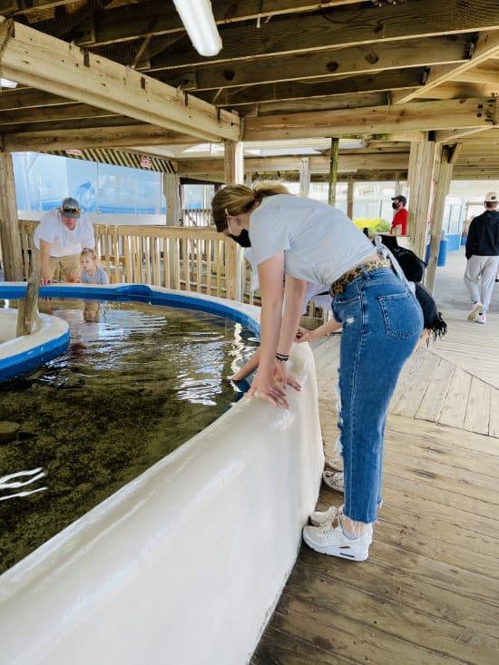 Touching animals at the Gulfarium