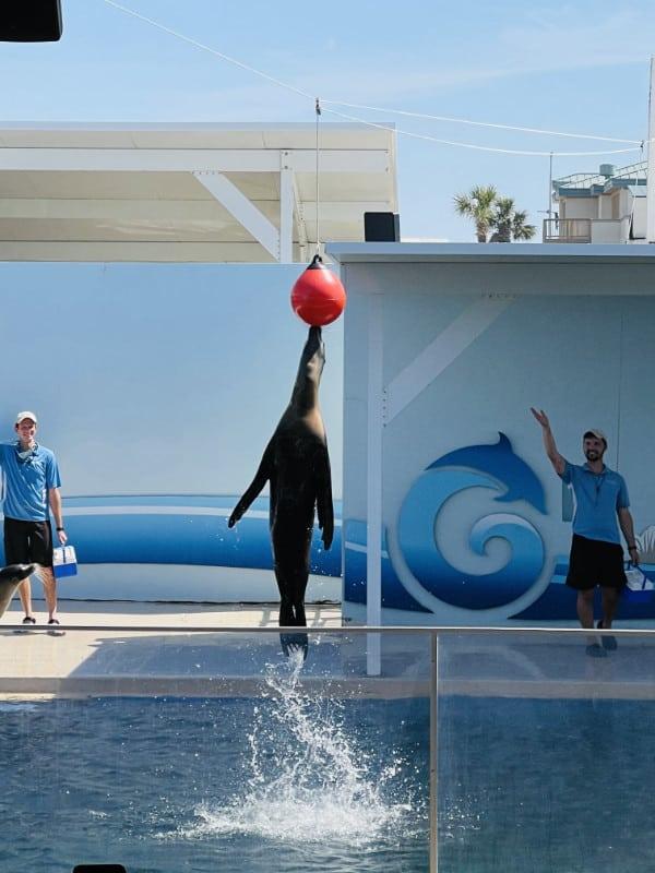 Sea Lion Show at Gulfarium Destin Fl