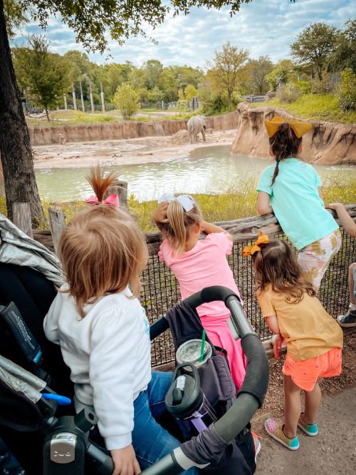 Kids watching animals Dallas zoo