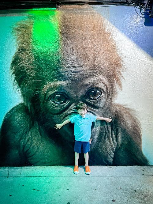 Monkey at the Dallas Zoo